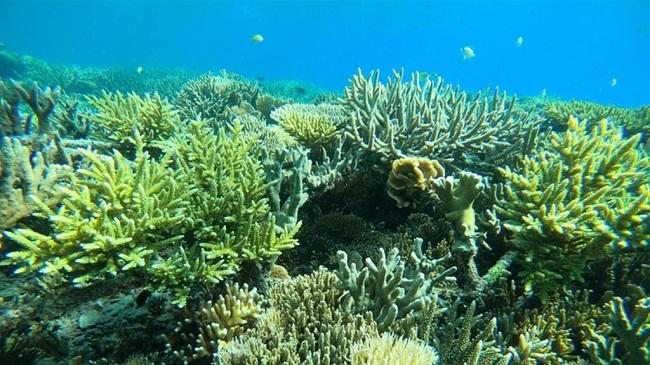 Mars presenta un programa para la recuperación de los arrecifes de coral